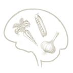 food_brain